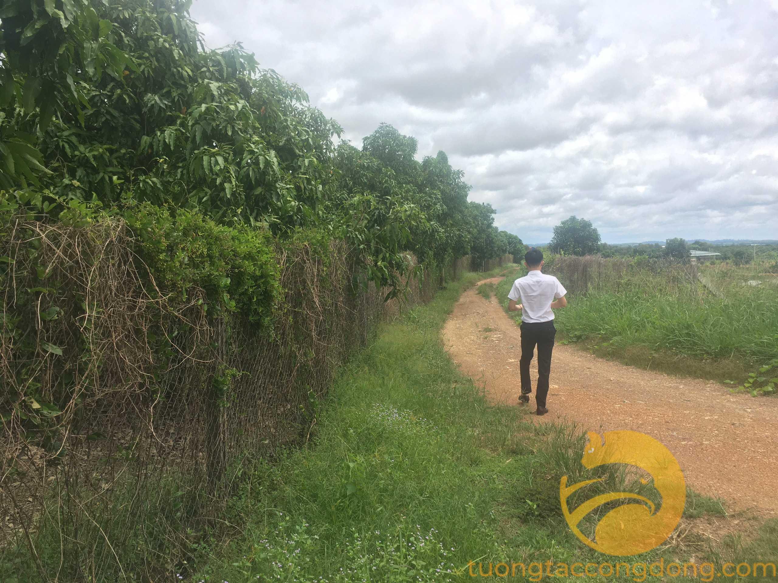 Đất trồng cây giá rẻ, 2000m2 giá 740 triệu sổ riêng, công chứng ngay